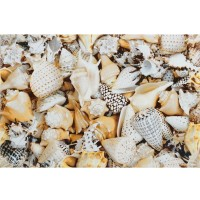 Настенный декор Opoczno Nizza Shells A Inserto 30x45 (шт)